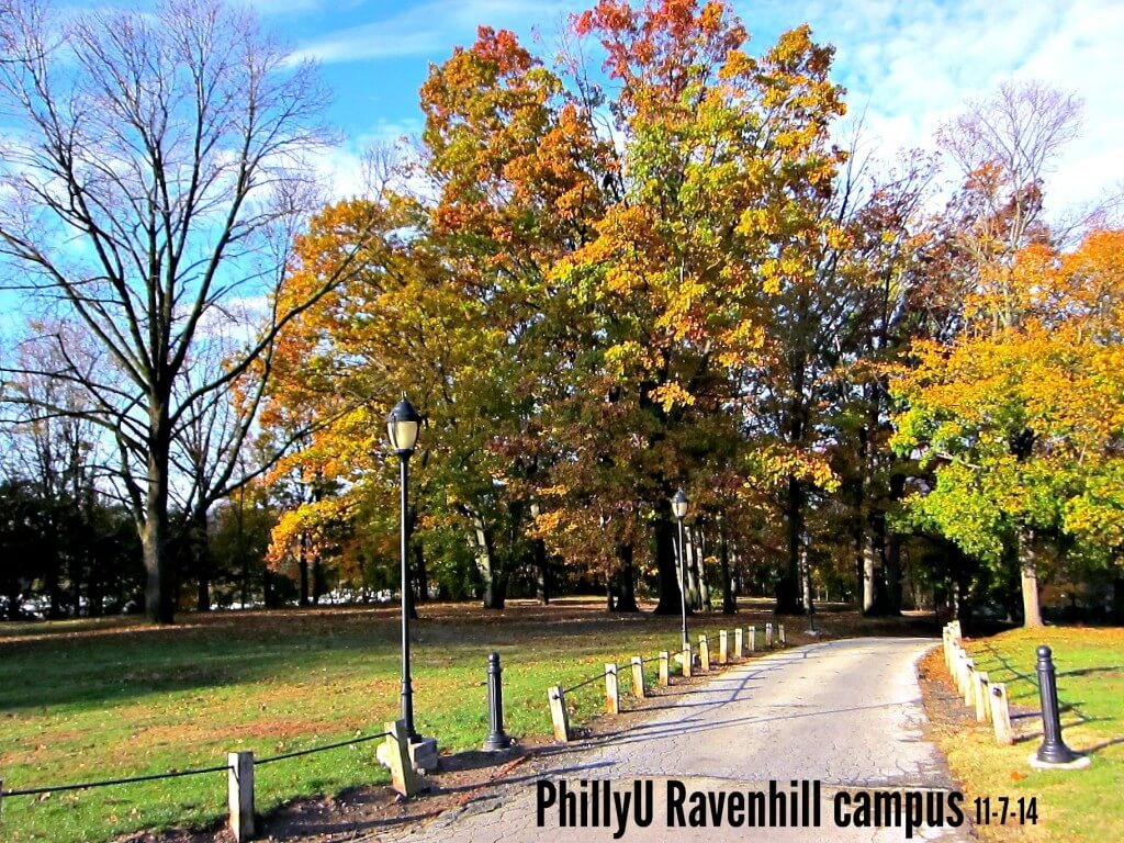11-7 Fall Foliage left PhillyU