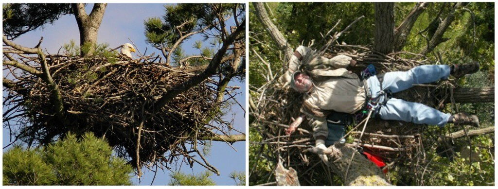 eagle nest collage