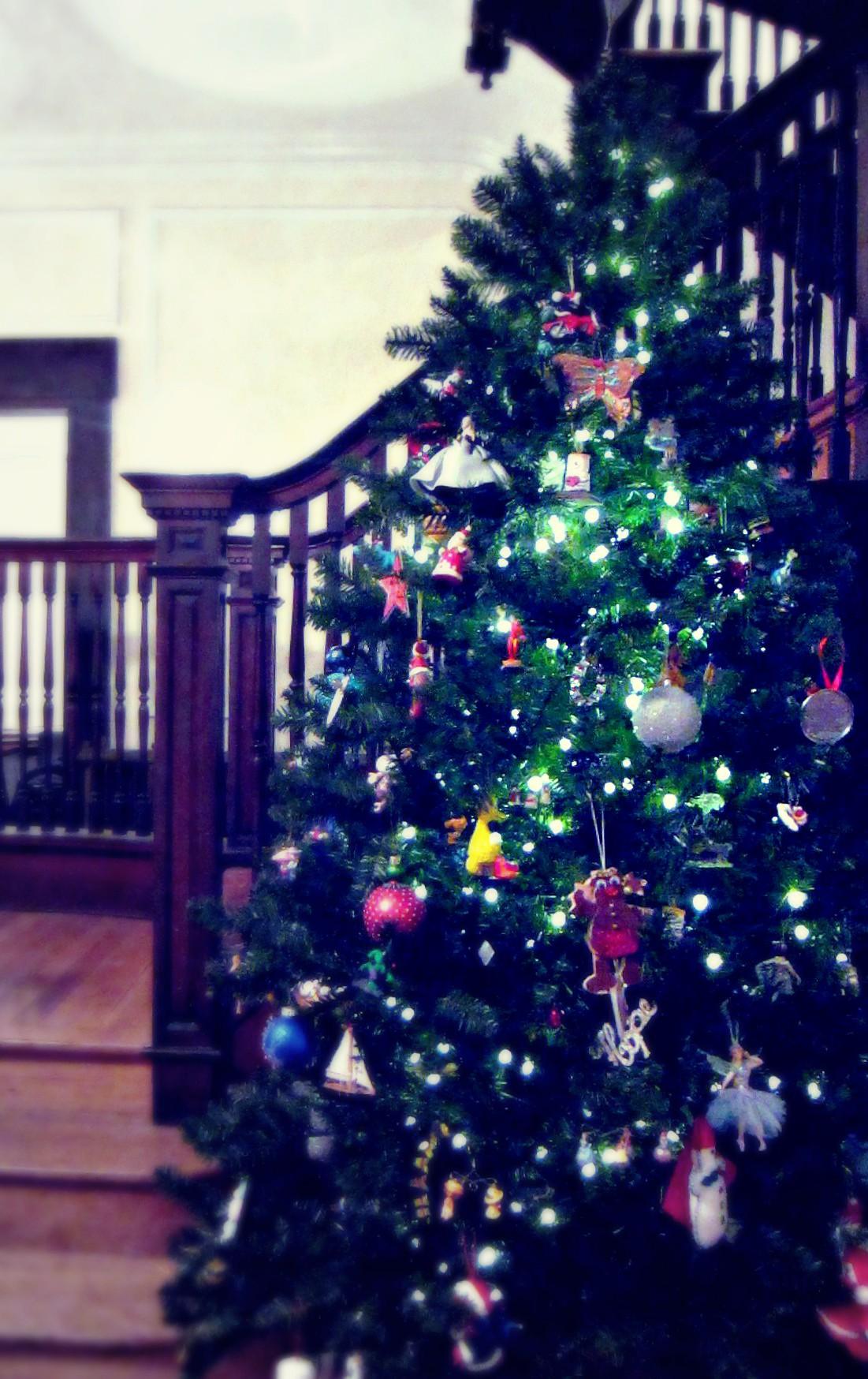 12-13 hohenadel tree pixlr