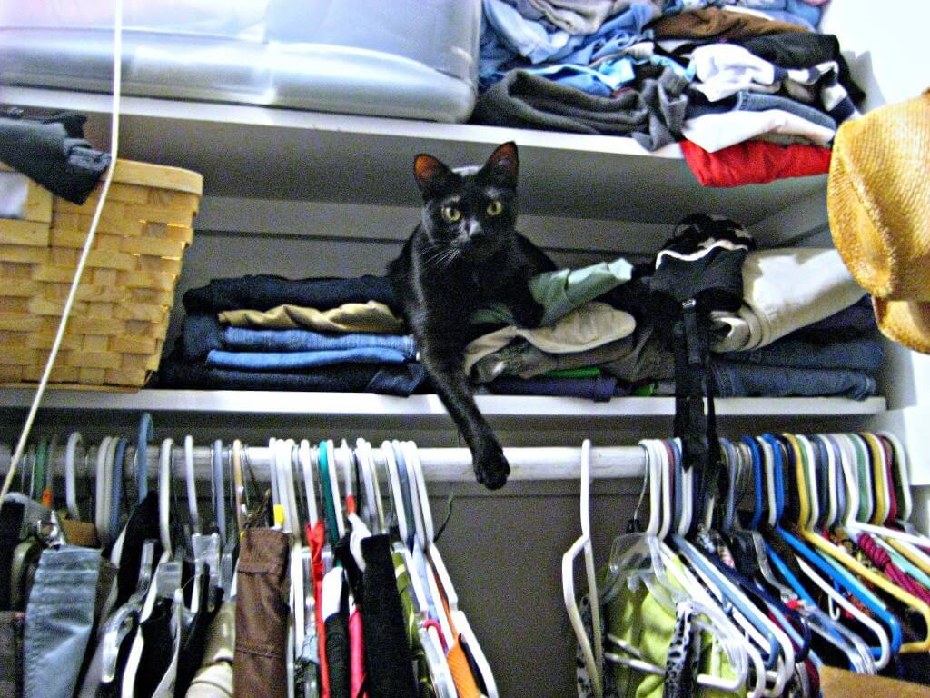 presto in my closet