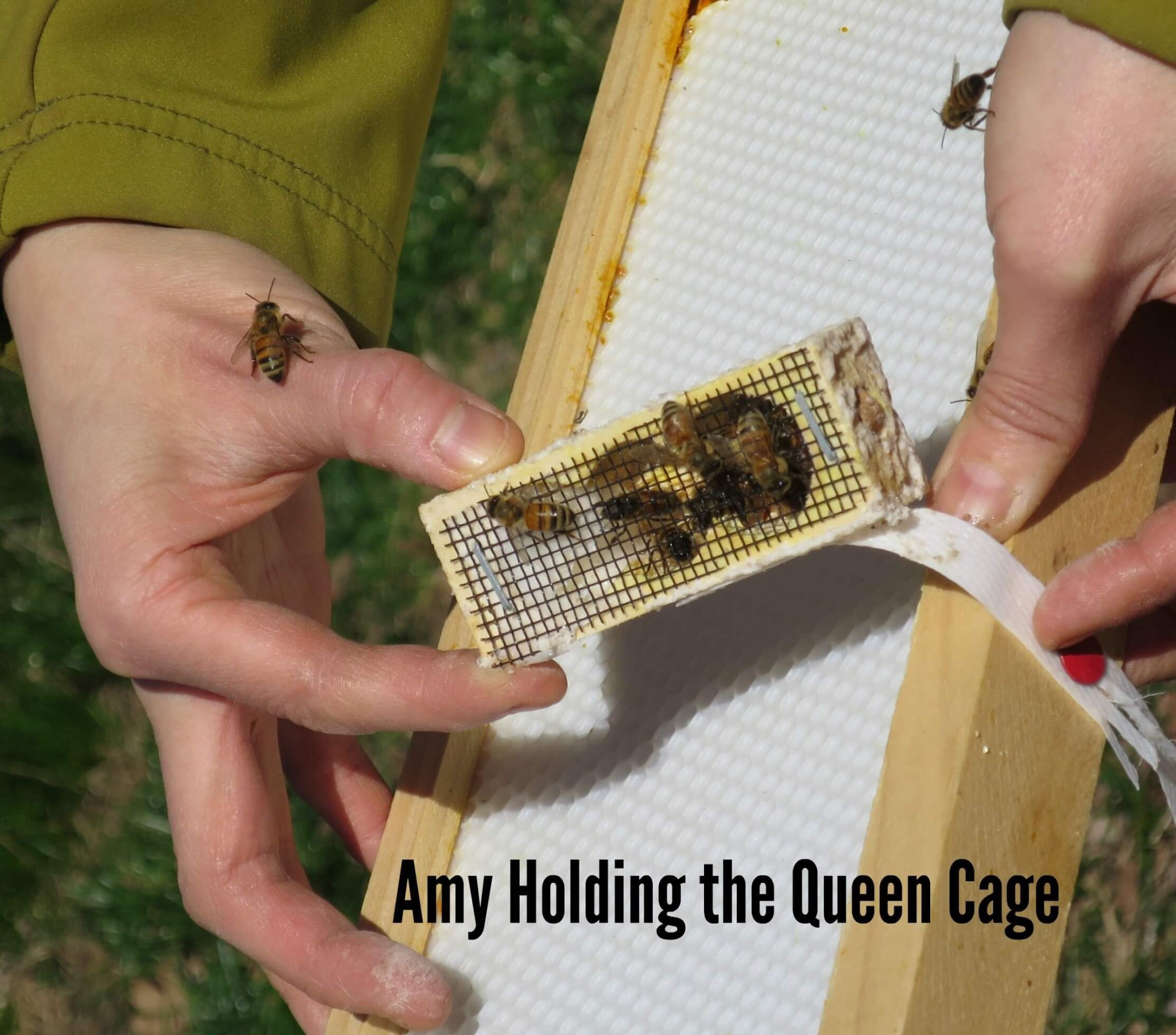 Eastfallslocal.Amy Holds Queen Cage