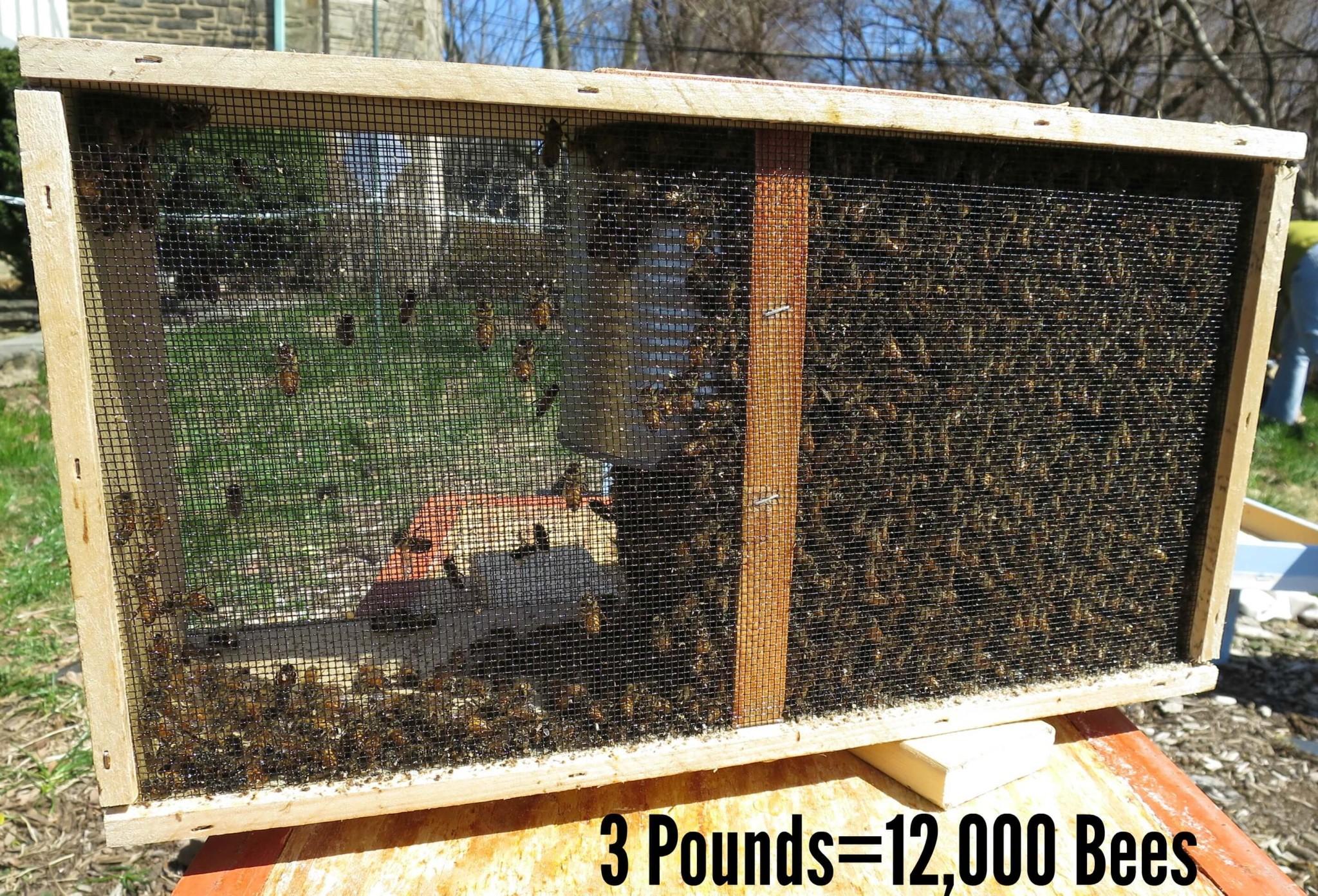 Eastfallslocal.Box o Bees