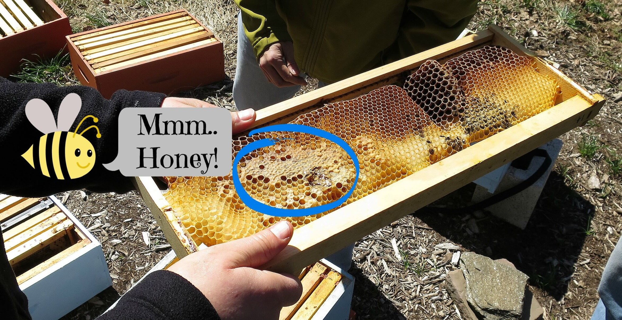 Eastfallslocal.Honey on comb.Retouched
