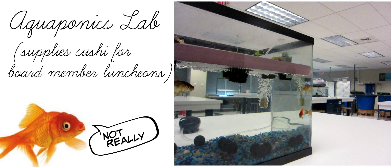 Eastfallslocal aquaponics image ha