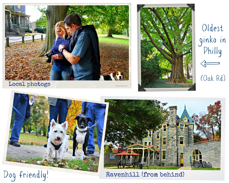 EastFallsLocal collage for post dog friendly ginko oak