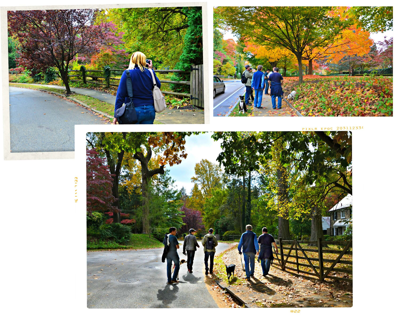 EastFallslocal collage fall foliage