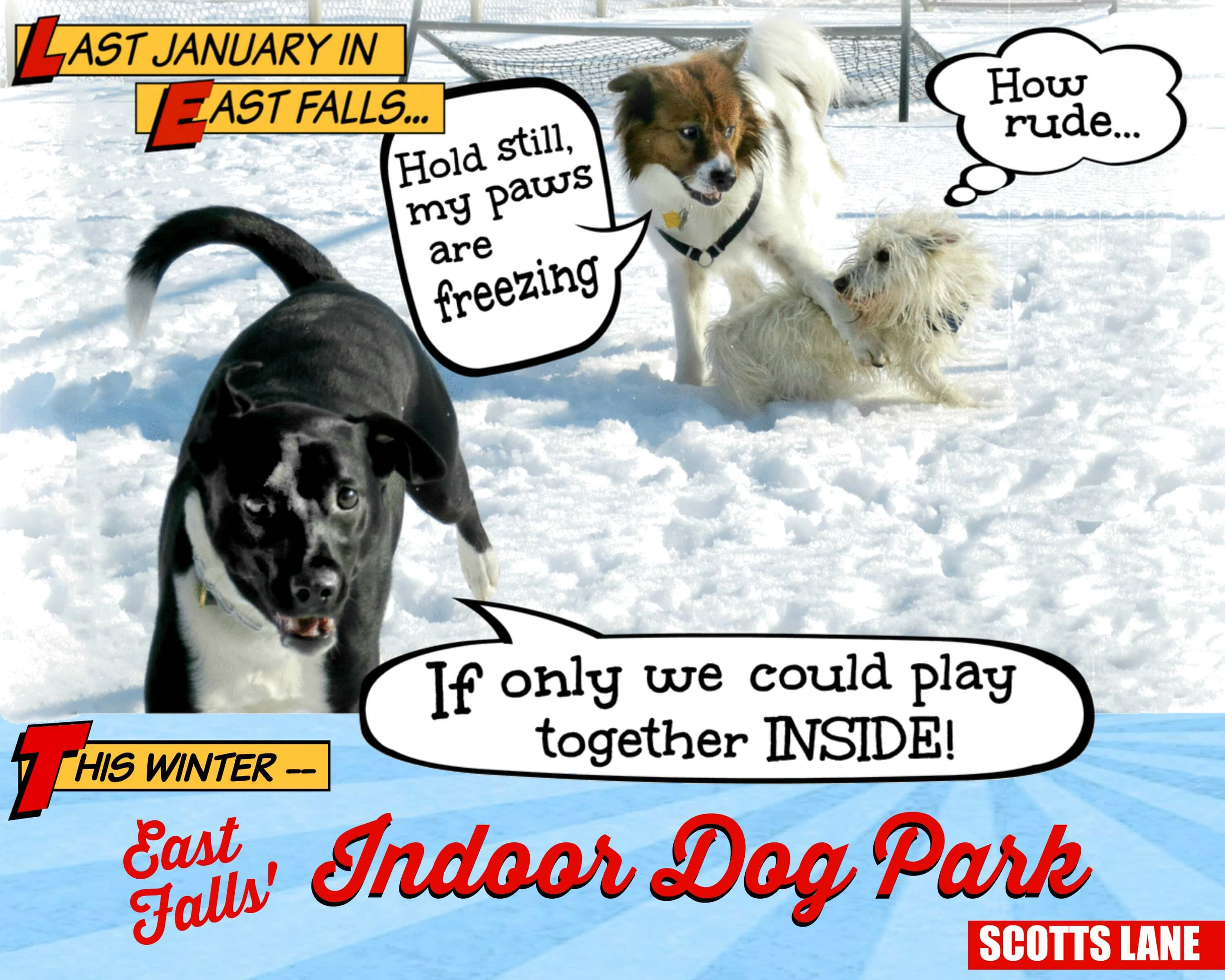 EastFallsLocal daisy wally ducky snow cartoon balloons text East Falls Indoor Dog Park